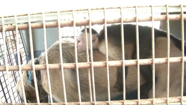 Собака усыновила обезьянку - Sputnik Таджикистан