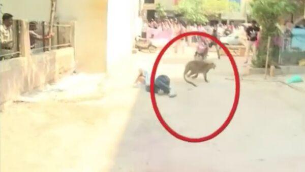 В Индии леопард заблудился в городе и начал нападать на людей - Sputnik Таджикистан