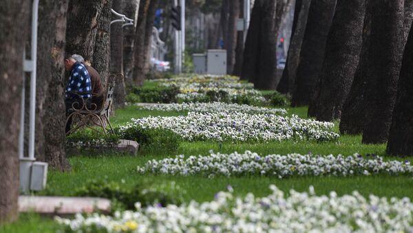 Цветущий город Душанбе, архивное фото - Sputnik Тоҷикистон