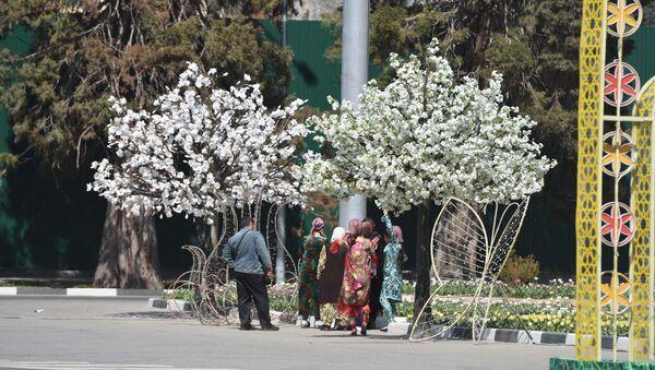 Цветущие деревья в Душанбе, архивное фото - Sputnik Тоҷикистон
