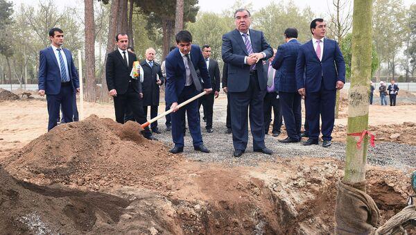 Эмомали Рахмон и Рустам посадили дерево каштан на проспекте Рудаки - Sputnik Тоҷикистон