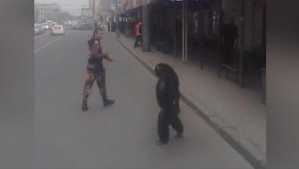 Шимпанзе сбежал из гастролирующего цирка в Краснодаре - Sputnik Таджикистан