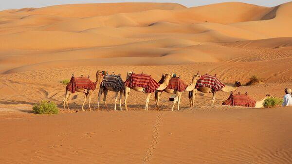 Верблюды в пустыне, архивное фото - Sputnik Тоҷикистон