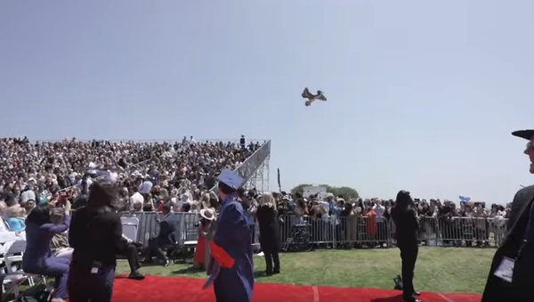В США пеликаны чуть не сорвали выпускной в университете - Sputnik Тоҷикистон