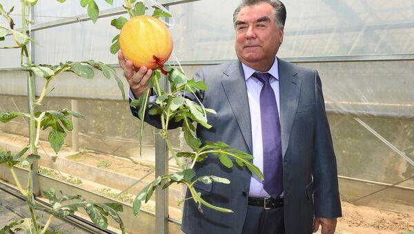 Рахмон посетил сельскохозяйственный институт в Китае - Sputnik Таджикистан