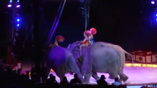 Слониха упала на зрителей во время циркового представления - Sputnik Таджикистан