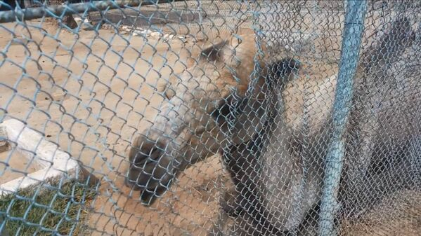 Верблюд оракул в Душанбинском зоопарке, архивное фото - Sputnik Таджикистан