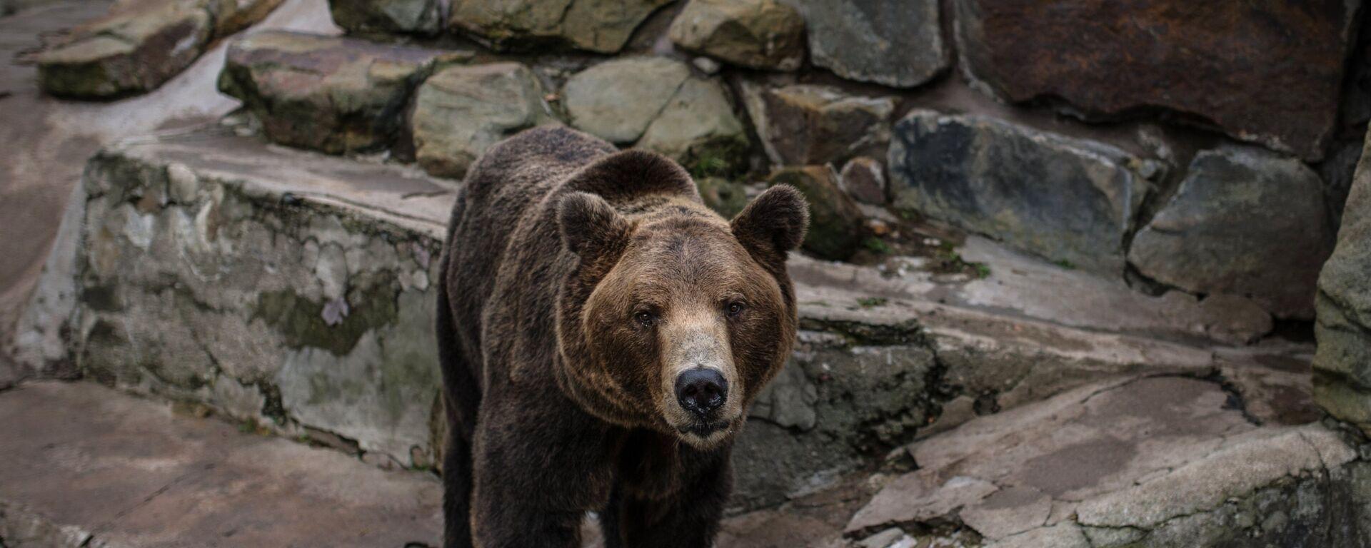 Бурый медведь, архивное фото - Sputnik Тоҷикистон, 1920, 20.07.2019