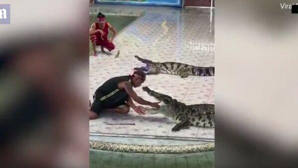 Крокодил чуть не откусил руку дрессировщику в Таиланде - Sputnik Тоҷикистон