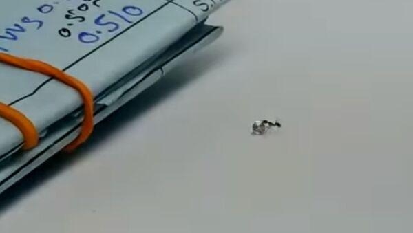 Видео: Похищение муравьем брильянта - Sputnik Таджикистан