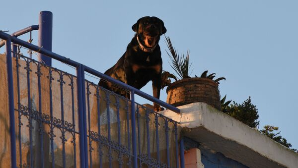 Собака охраняет жилой дом - Sputnik Таджикистан