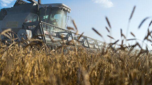 Уборка пшеницы на полях, архивное фото - Sputnik Таджикистан
