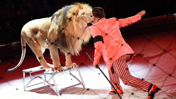 Лев в цирке, архивное фото - Sputnik Таджикистан