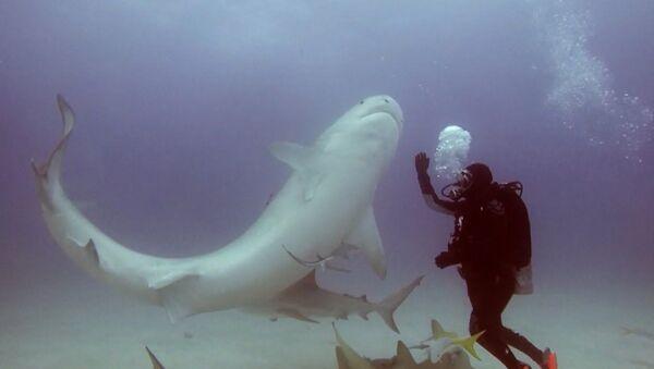 На Багамских островах дайвер ввёл тигровую акулу в транс - Sputnik Таджикистан