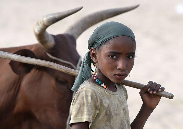 Девочка пасет стадо коров в окрестностях озера Чад - Sputnik Таджикистан
