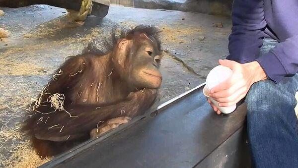 Необычная реакция обезьянки на фокус - смешное видео - Sputnik Таджикистан