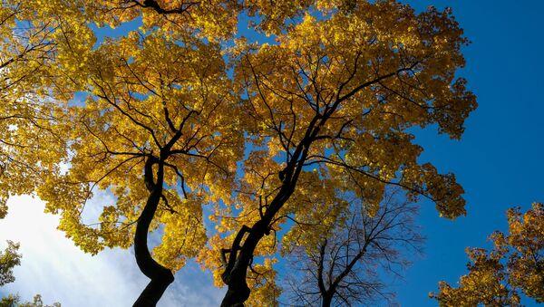 Осень, архивное фото - Sputnik Тоҷикистон