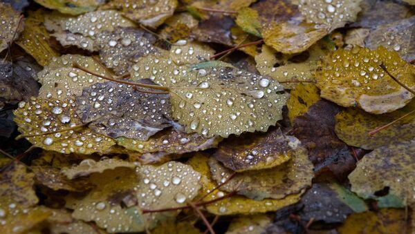 Осенние листья опавшие после дождя, архивное фото - Sputnik Таджикистан