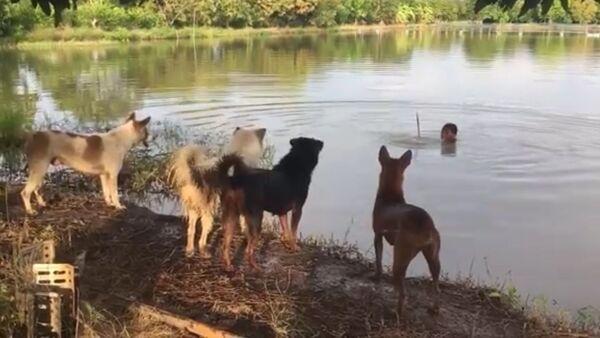 Хозяин разыграл своих собак - Sputnik Таджикистан