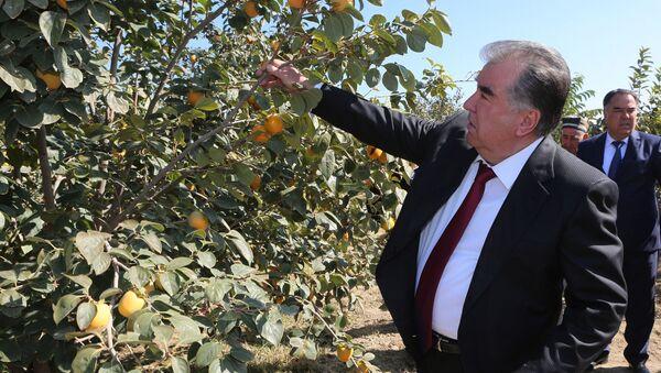 Эмомали Рахмон посетил фруктовые сады в районе Джаббор Расулов - Sputnik Тоҷикистон
