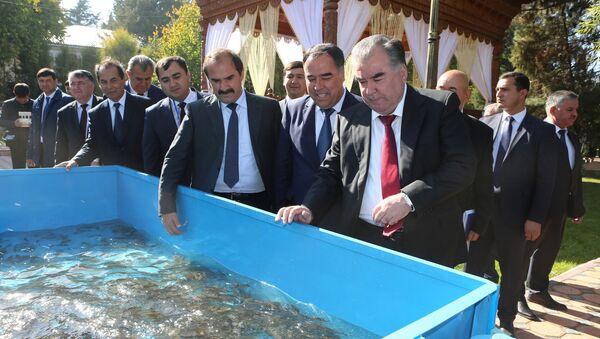 Эмомали Рахмон выпустил рыбу в озеро в Согдийской области - Sputnik Таджикистан