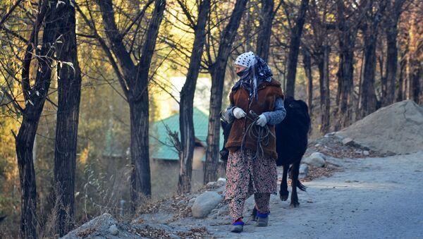 Местная жительница Восейского района перегоняет бычка - Sputnik Тоҷикистон