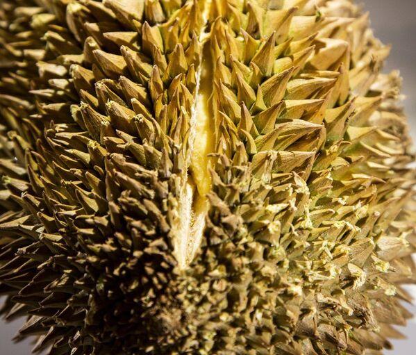 Durian - Sputnik Таджикистан