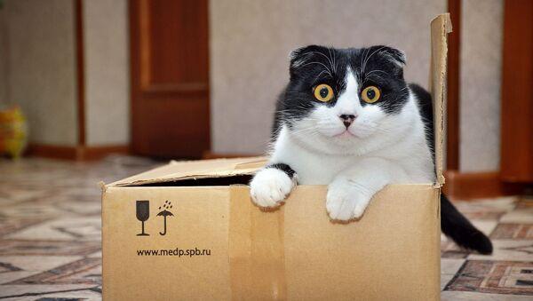 Кот в коробке, архивное фото - Sputnik Таджикистан