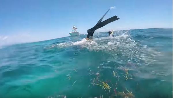 Акула чуть не откусила голову дайверу - Sputnik Таджикистан