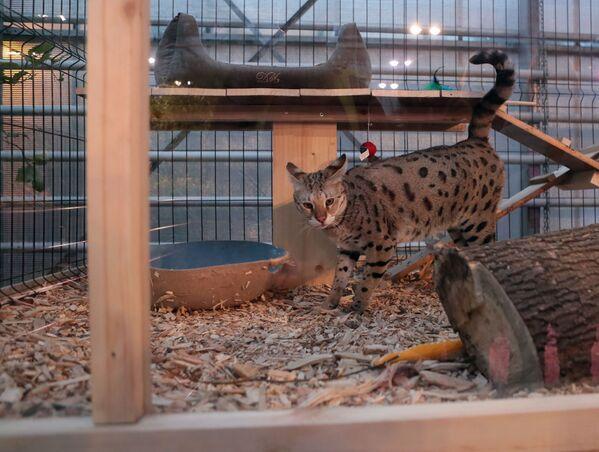 Выставка самых редких домашних кошек в Ботаническом саду МГУ Аптекарский огород - Sputnik Таджикистан