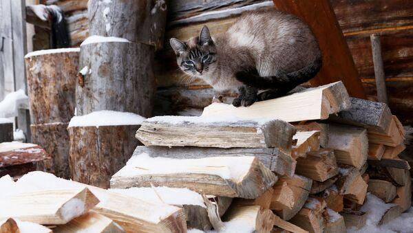 Кошка сидит на дровах  - Sputnik Таджикистан