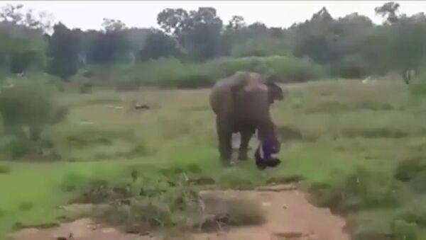 Слон затоптал неумелого гипнотизера - Sputnik Таджикистан