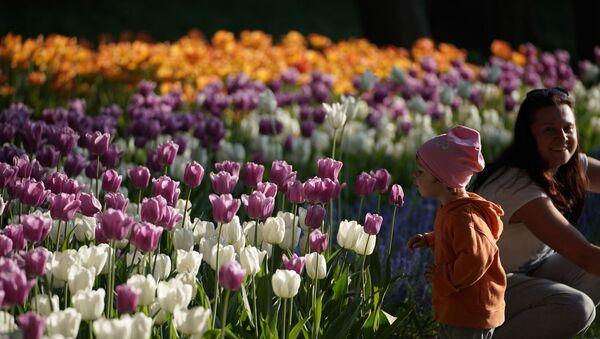 Тюльпаны, архивное фото - Sputnik Таджикистан