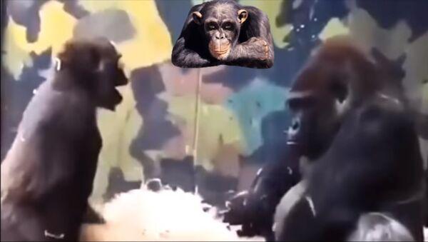 Детеныш гориллы - Sputnik Таджикистан