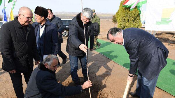 Эмомали Рахмон высаживает яблони - Sputnik Таджикистан
