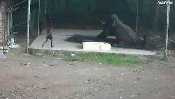 В Индии слон раздавил ударившего его надсмотрщика - Sputnik Таджикистан