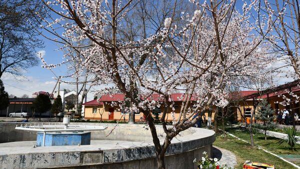 Цветущие деревья в парке ЖД, архивное фото - Sputnik Тоҷикистон