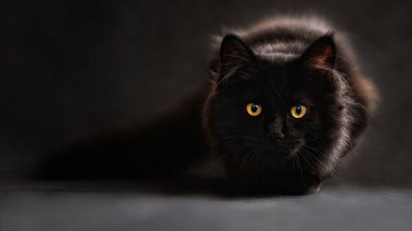 Черный кот - Sputnik Таджикистан
