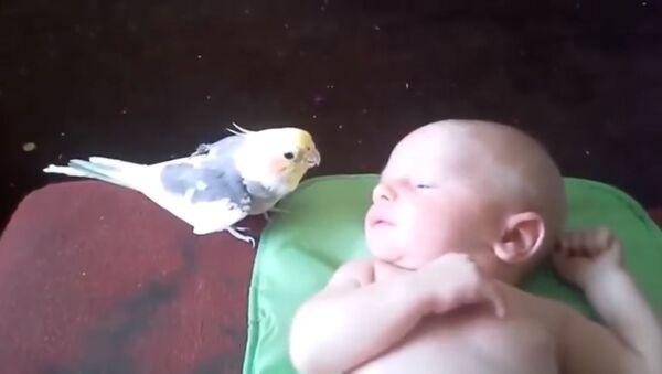 Попугай поет специально для младенца - Sputnik Таджикистан
