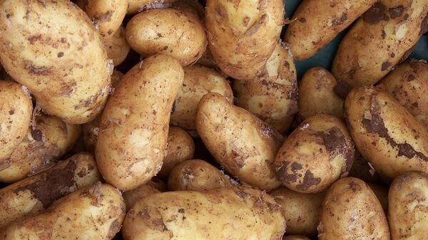 Картофель - Sputnik Таджикистан