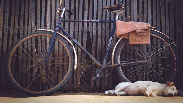 Собака спит около велосипеда - Sputnik Тоҷикистон