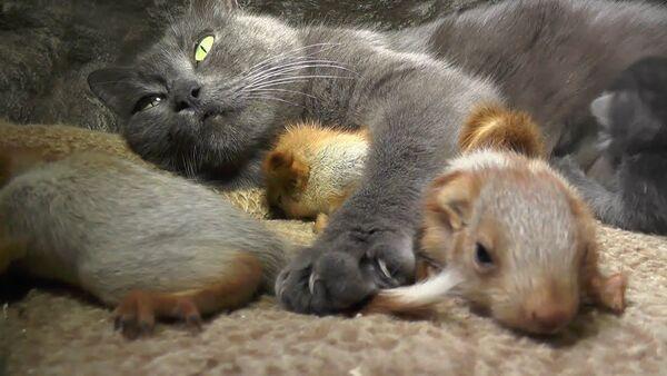 Кошка приютила и вскормила осиротевших детенышей белки - Sputnik Тоҷикистон
