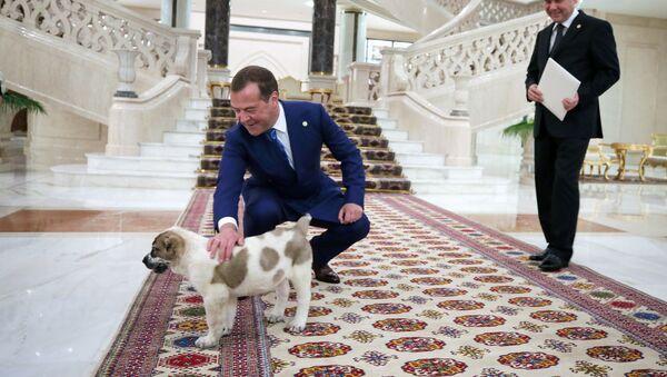 Премьер-министр РФ Д. Медведев принимает участие в заседании Совета глав правительств СНГ  - Sputnik Тоҷикистон