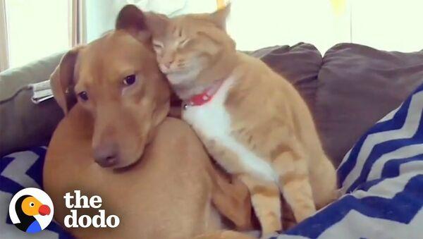Кот и пес - пример самой настоящей дружбы - видео - Sputnik Тоҷикистон