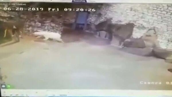 Уборщица в Московском зоопарке остановила белого медведя веником - Sputnik Тоҷикистон