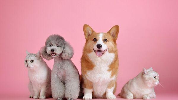 Собаки и кошки на разовом фоне - Sputnik Таджикистан
