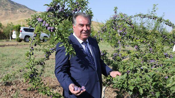 Президент Таджикистана Эмомали Рахмон в парке Чашмаи нукра - Sputnik Таджикистан
