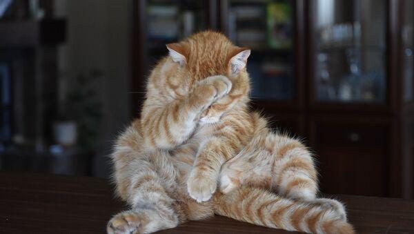 Кот умывается - Sputnik Таджикистан