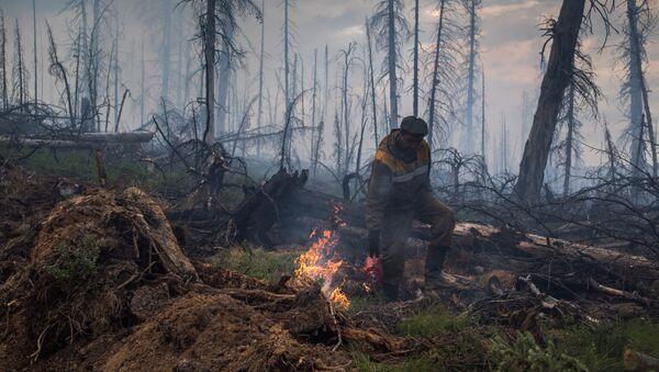 Последствия лесных пожаров в Бурятии - Sputnik Таджикистан