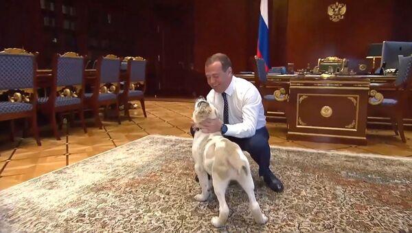 Медведев показал подросшего щенка, подаренного президентом Туркмении - Sputnik Тоҷикистон